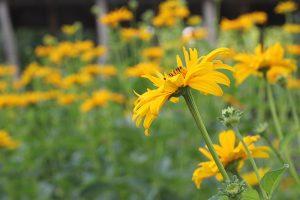 Blumen im Schulgarten, Gutenberg-Schule Berlin